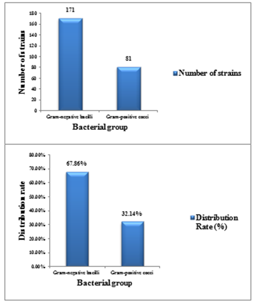 Figure 2 Distribution of bacterial groups in the biofilms